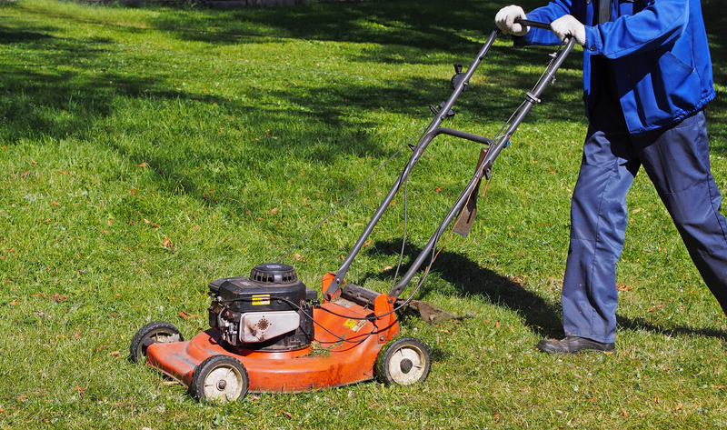3 Spring Tips for the Best Summer Lawn - Zanjani Cleaning Service - Commercial Cleaning Calgary